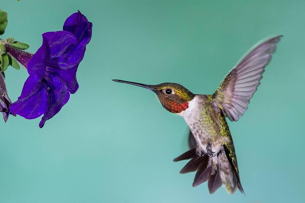 Koliber a pozycjonowanie